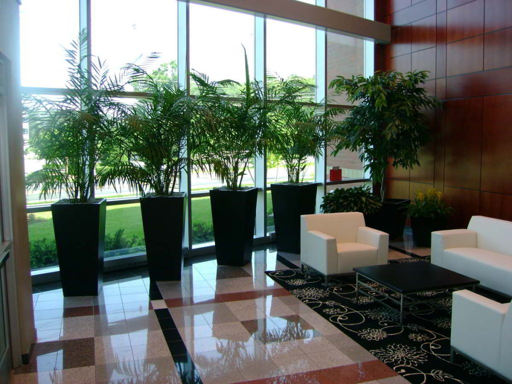 indoor plants in waiting room