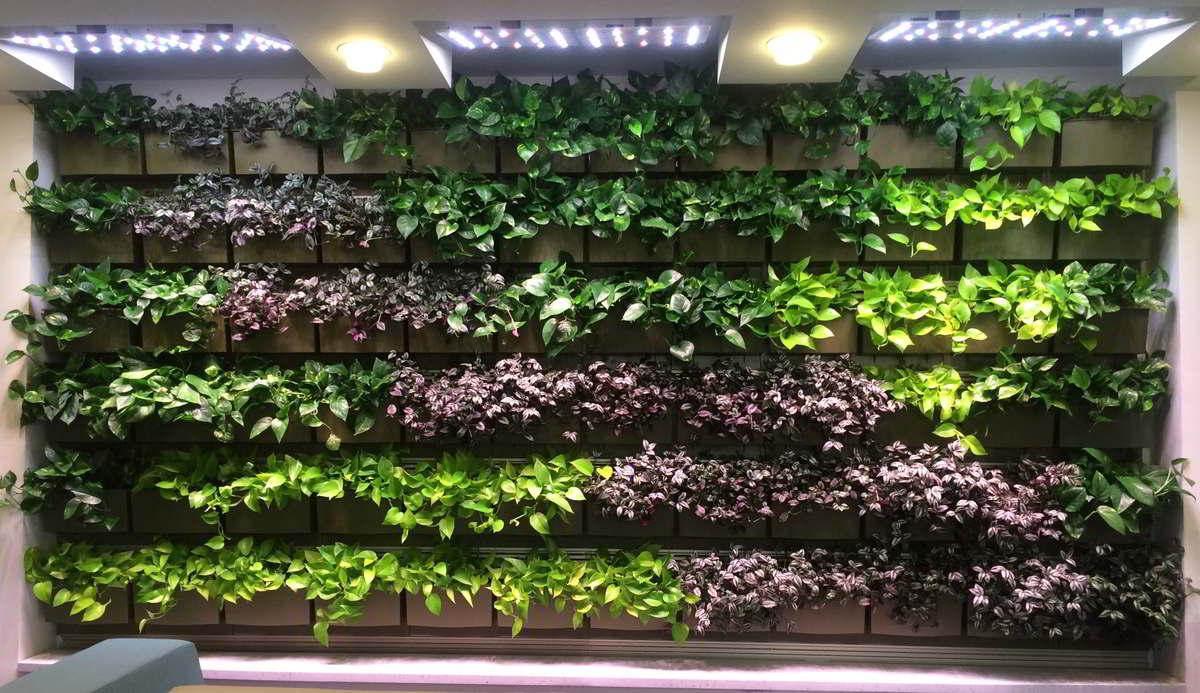Green Living Walls Plant Wall Maintenance Pennsylvania