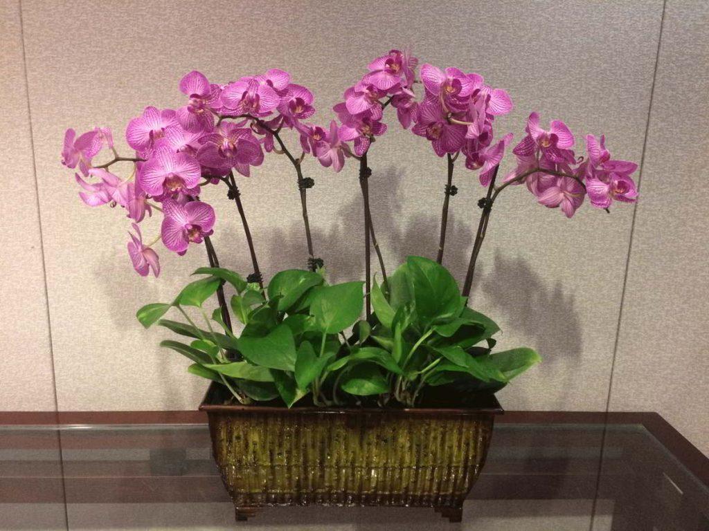 indoor office plant arrangement