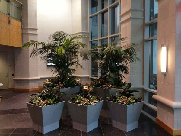 indoor plants in office